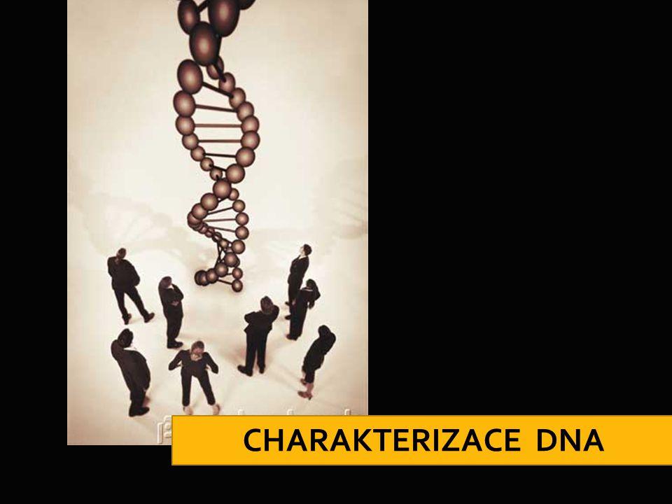 CHARAKTERIZACE DNA