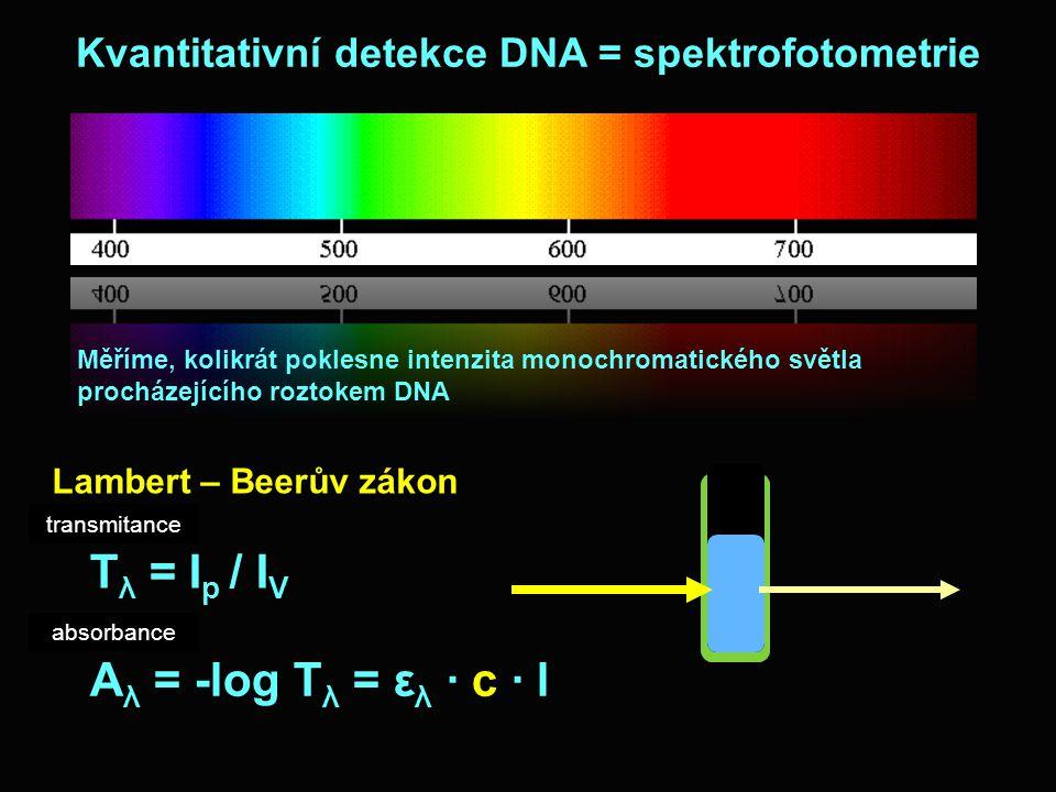 Kvantitativní detekce DNA = spektrofotometrie Měříme, kolikrát poklesne intenzita monochromatického světla procházejícího roztokem DNA T λ = I p / I V A λ = -log T λ = ε λ · c · l Lambert – Beerův zákon transmitance absorbance