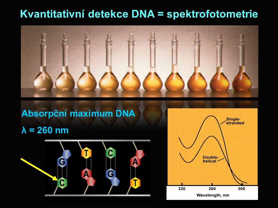 Kvantitativní detekce DNA = spektrofotometrie Absorpční maximum DNA λ = 260 nm