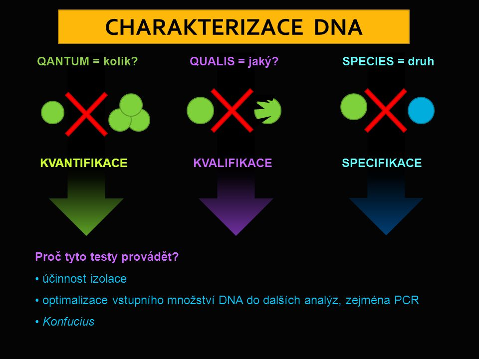 Proč tyto testy provádět? účinnost izolace optimalizace vstupního množství DNA do dalších analýz, zejména PCR Konfucius QANTUM = kolik? KVANTIFIKACE Q
