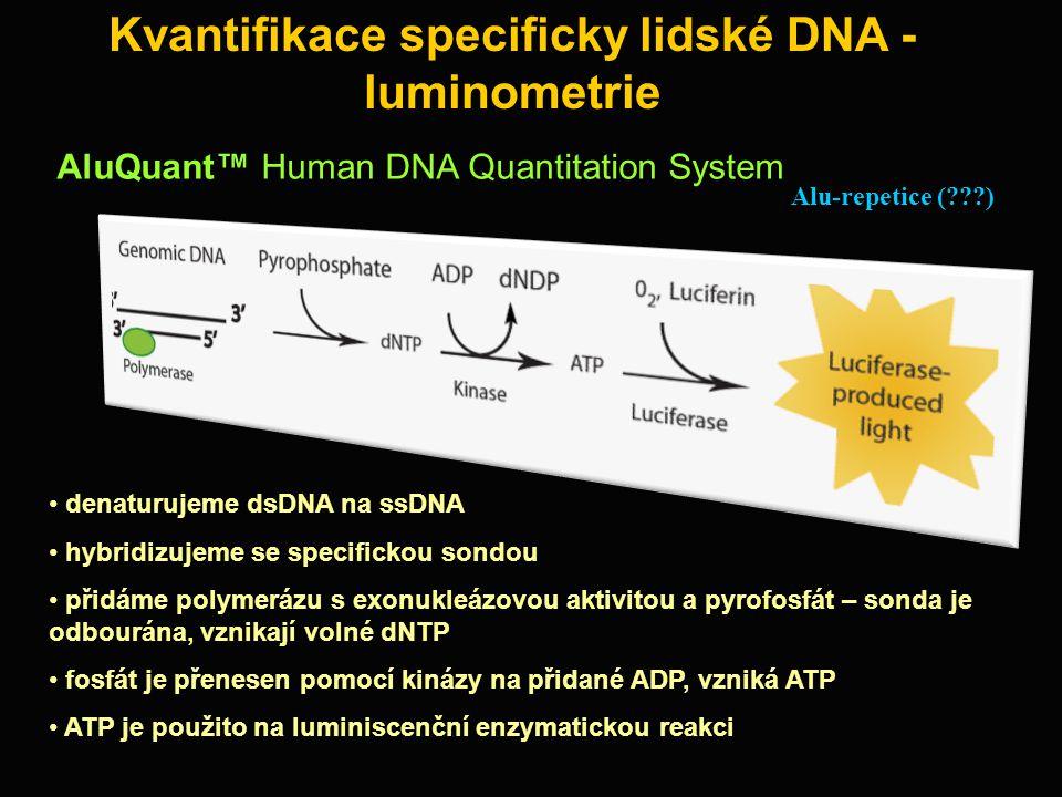Kvantifikace specificky lidské DNA - luminometrie denaturujeme dsDNA na ssDNA hybridizujeme se specifickou sondou přidáme polymerázu s exonukleázovou aktivitou a pyrofosfát – sonda je odbourána, vznikají volné dNTP fosfát je přenesen pomocí kinázy na přidané ADP, vzniká ATP ATP je použito na luminiscenční enzymatickou reakci Alu-repetice (???) AluQuant™ Human DNA Quantitation System