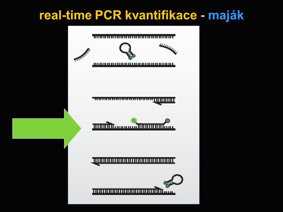 real-time PCR kvantifikace - maják