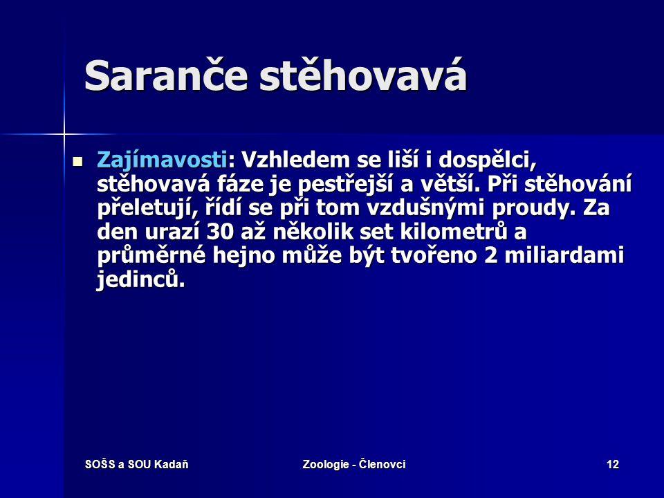 SOŠS a SOU KadaňZoologie - Členovci12 Saranče stěhovavá Zajímavosti: Vzhledem se liší i dospělci, stěhovavá fáze je pestřejší a větší. Při stěhování p