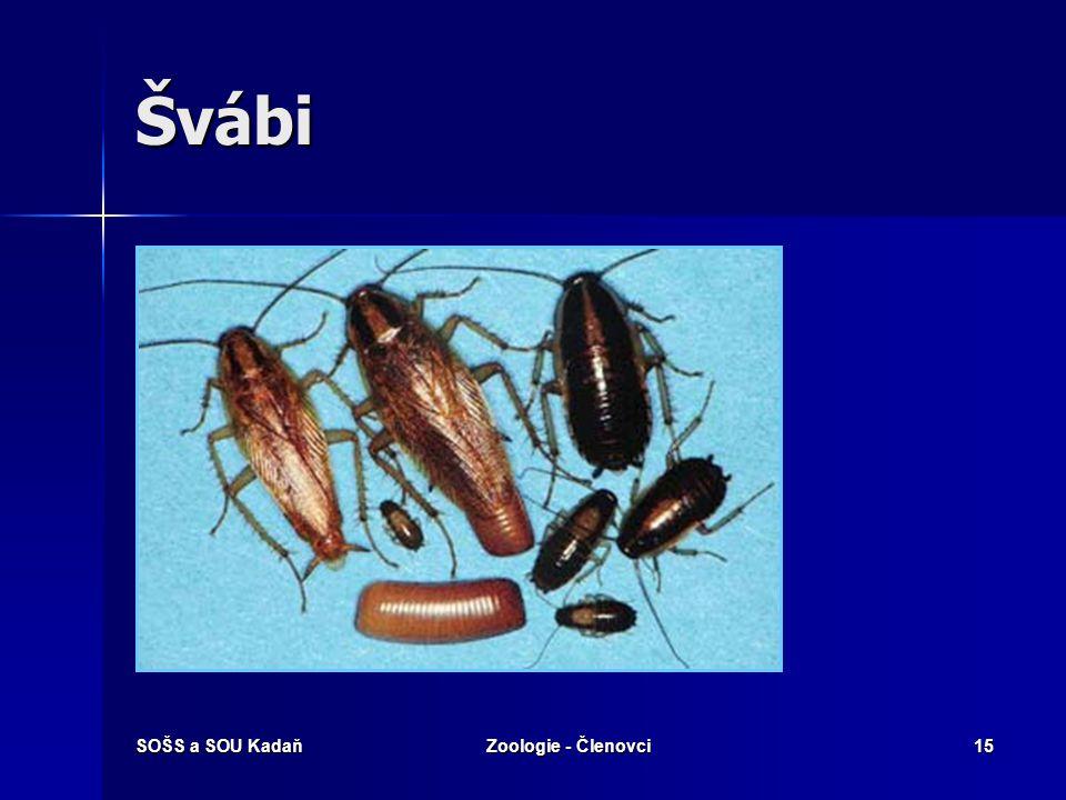 SOŠS a SOU KadaňZoologie - Členovci15 Švábi
