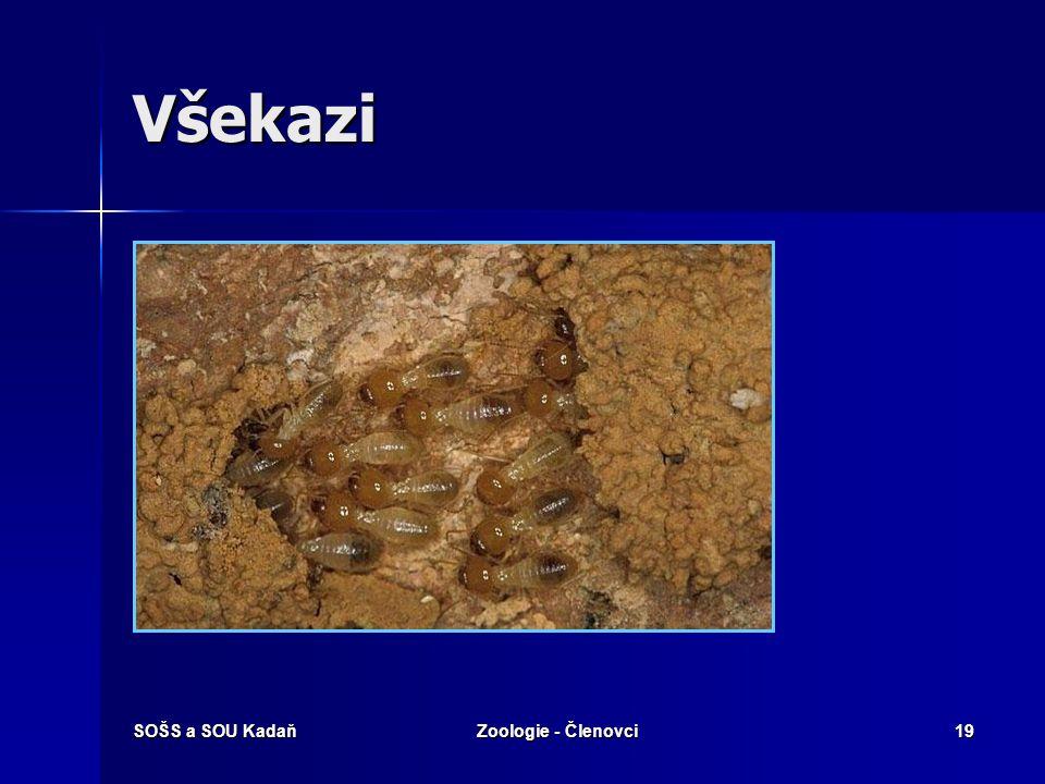 SOŠS a SOU KadaňZoologie - Členovci19 Všekazi