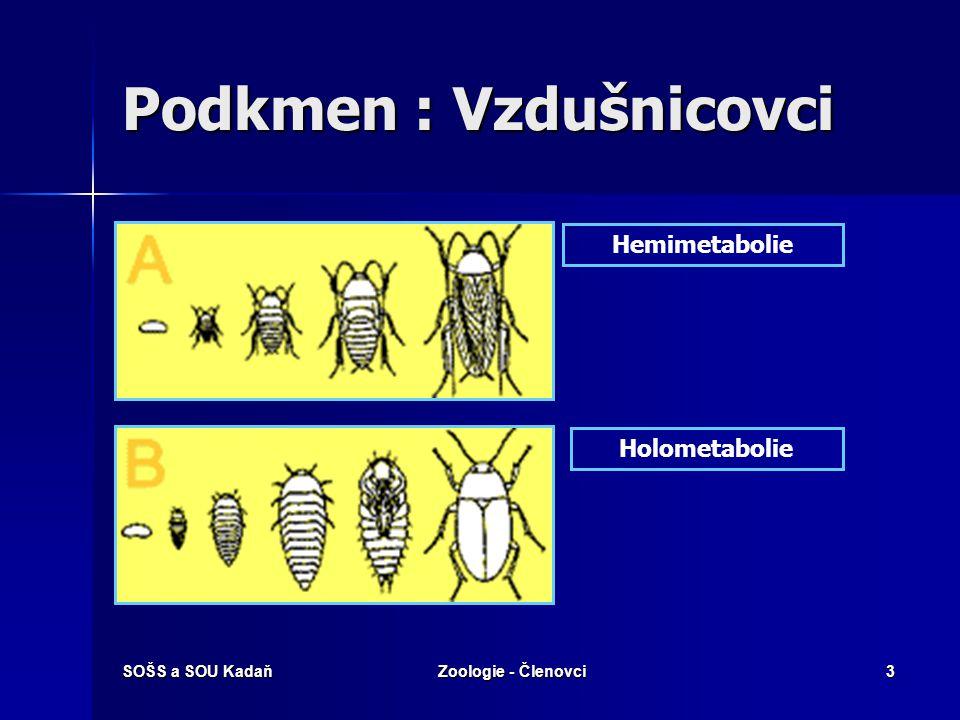 SOŠS a SOU KadaňZoologie - Členovci3 Hemimetabolie Holometabolie Podkmen : Vzdušnicovci