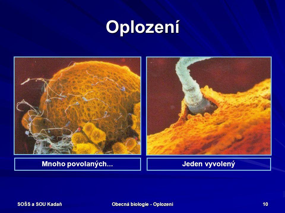 SOŠS a SOU Kadaň Obecná biologie - Oplození 9 Oplození Polyspermie – když příliš mnoho spermií pronikne do vajíčka, dochází k přerušení oplození.