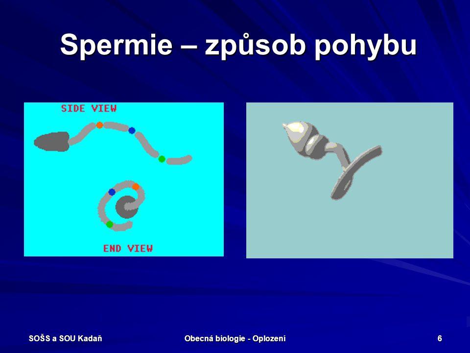 SOŠS a SOU Kadaň Obecná biologie - Oplození 5 Spermie - stavba