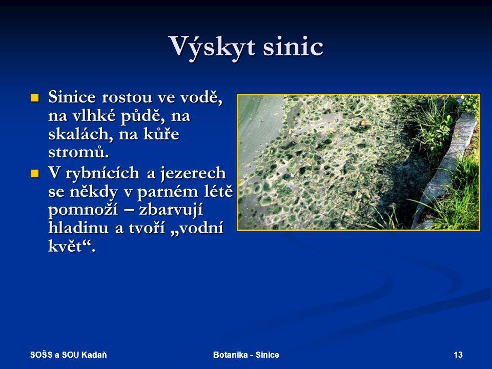 SOŠS a SOU Kadaň 13Botanika - Sinice Výskyt sinic Sinice rostou ve vodě, na vlhké půdě, na skalách, na kůře stromů.