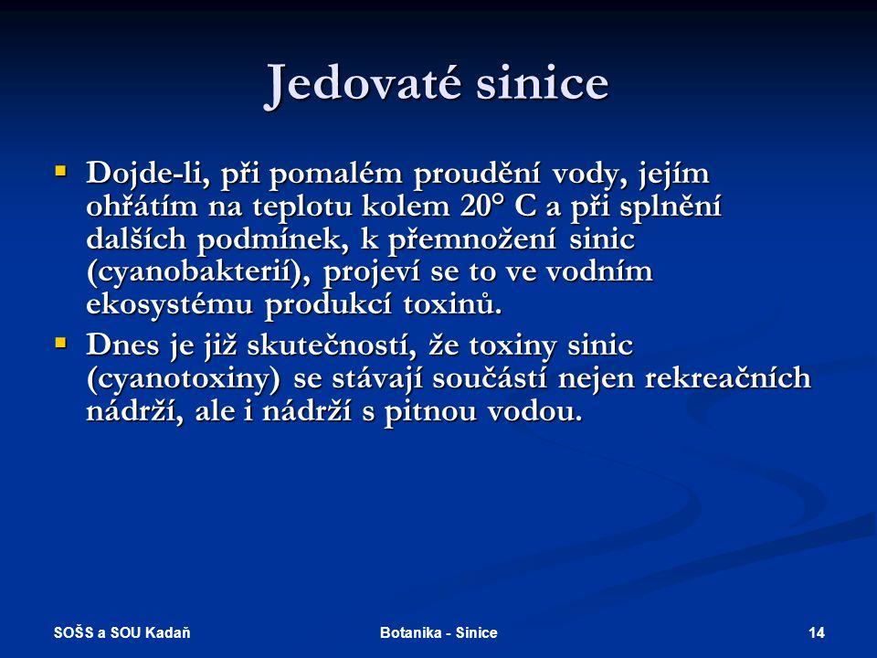 SOŠS a SOU Kadaň 14Botanika - Sinice Jedovaté sinice  Dojde-li, při pomalém proudění vody, jejím ohřátím na teplotu kolem 20° C a při splnění dalších podmínek, k přemnožení sinic (cyanobakterií), projeví se to ve vodním ekosystému produkcí toxinů.