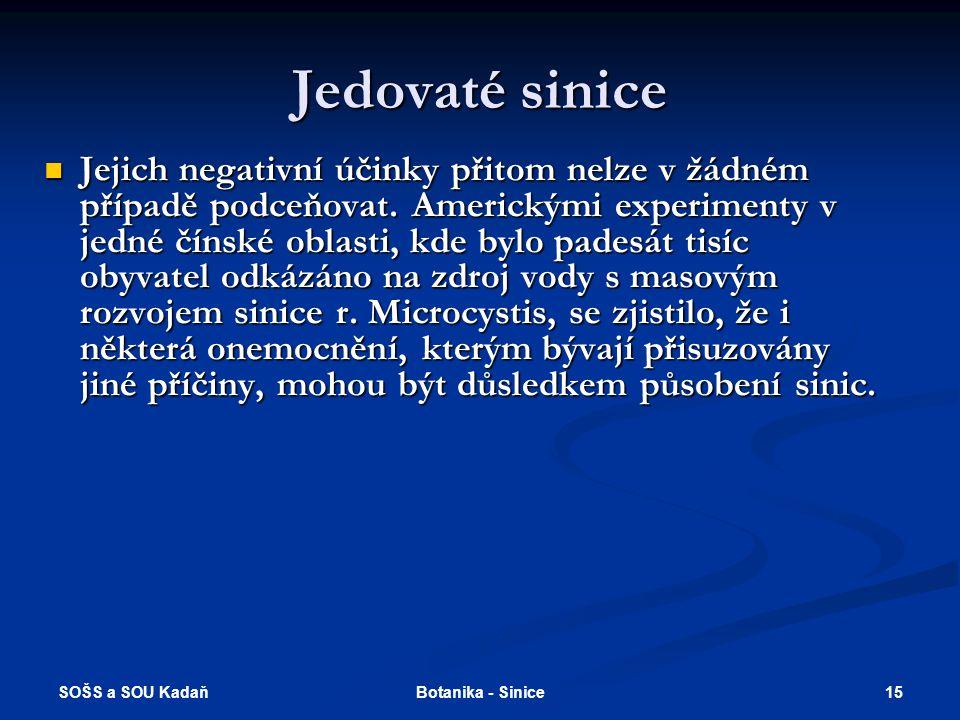 SOŠS a SOU Kadaň 15Botanika - Sinice Jedovaté sinice Jejich negativní účinky přitom nelze v žádném případě podceňovat.