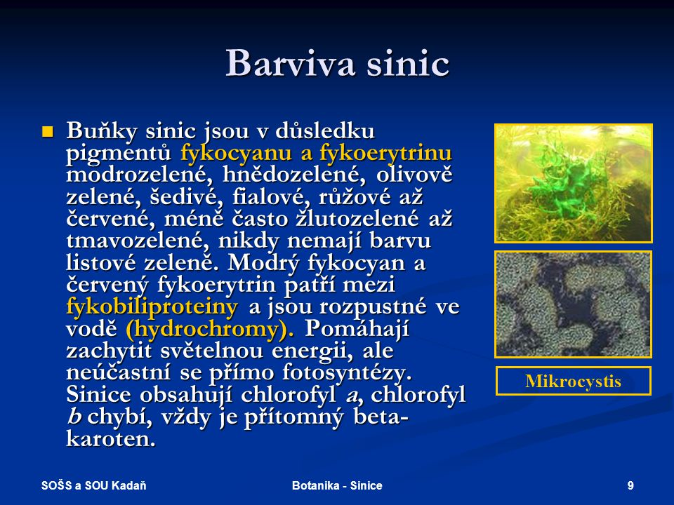 SOŠS a SOU Kadaň 9Botanika - Sinice Barviva sinic Buňky sinic jsou v důsledku pigmentů fykocyanu a fykoerytrinu modrozelené, hnědozelené, olivově zelené, šedivé, fialové, růžové až červené, méně často žlutozelené až tmavozelené, nikdy nemají barvu listové zeleně.