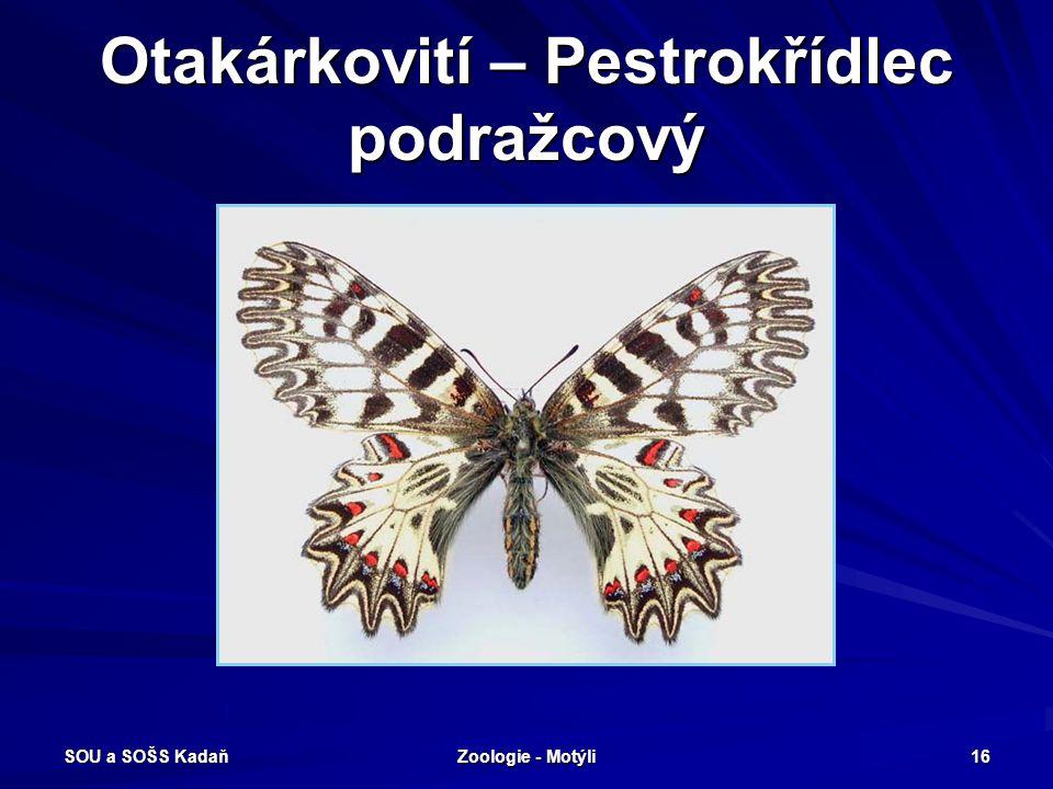 SOU a SOŠS Kadaň Zoologie - Motýli 15 Otakárkovití – Otakárek ovocný