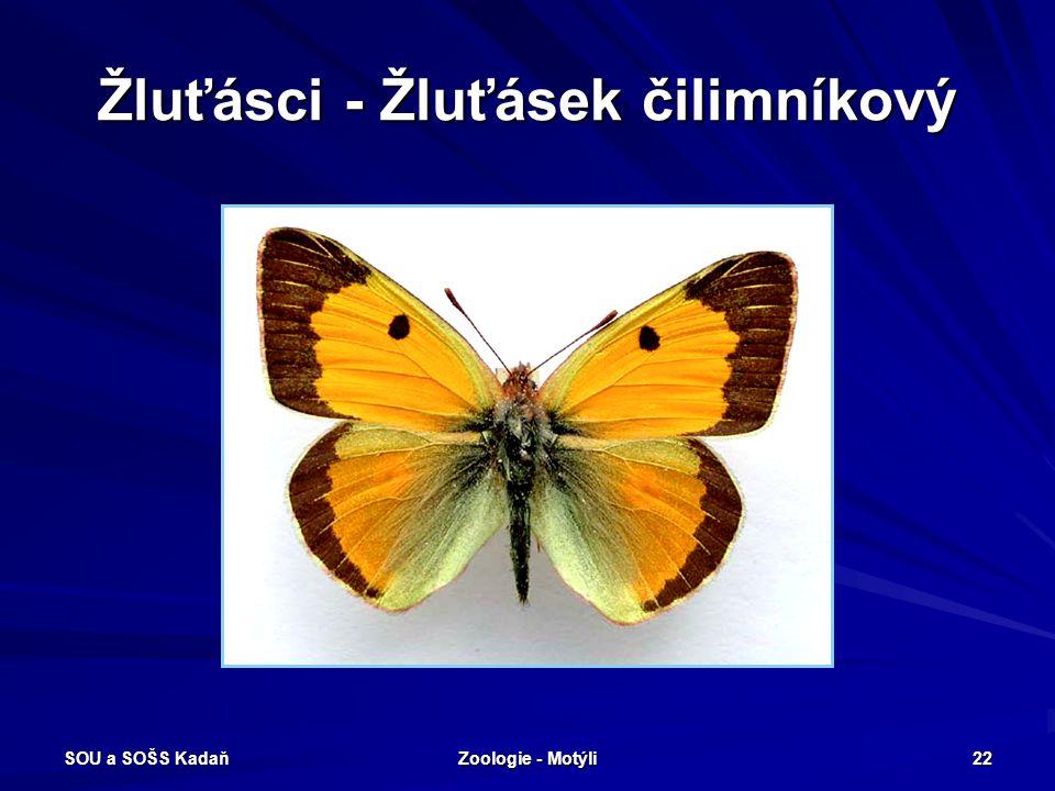 SOU a SOŠS Kadaň Zoologie - Motýli 21 Bělásci – Bělásek ovocný