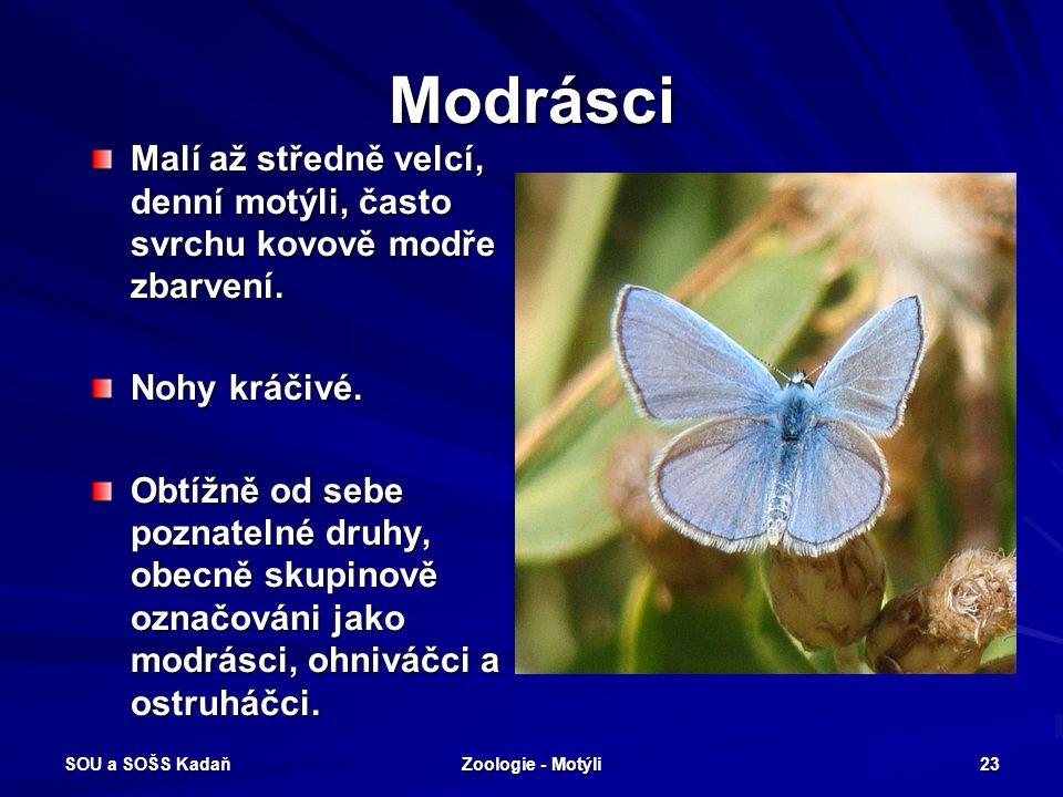 SOU a SOŠS Kadaň Zoologie - Motýli 22 Žluťásci - Žluťásek čilimníkový