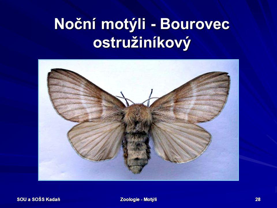 SOU a SOŠS Kadaň Zoologie - Motýli 27 Noční motýli Robustní motýli - obvykle přední křídla úzká, zadní křídla menší, rozšířená. Housenky pohyblivé, v