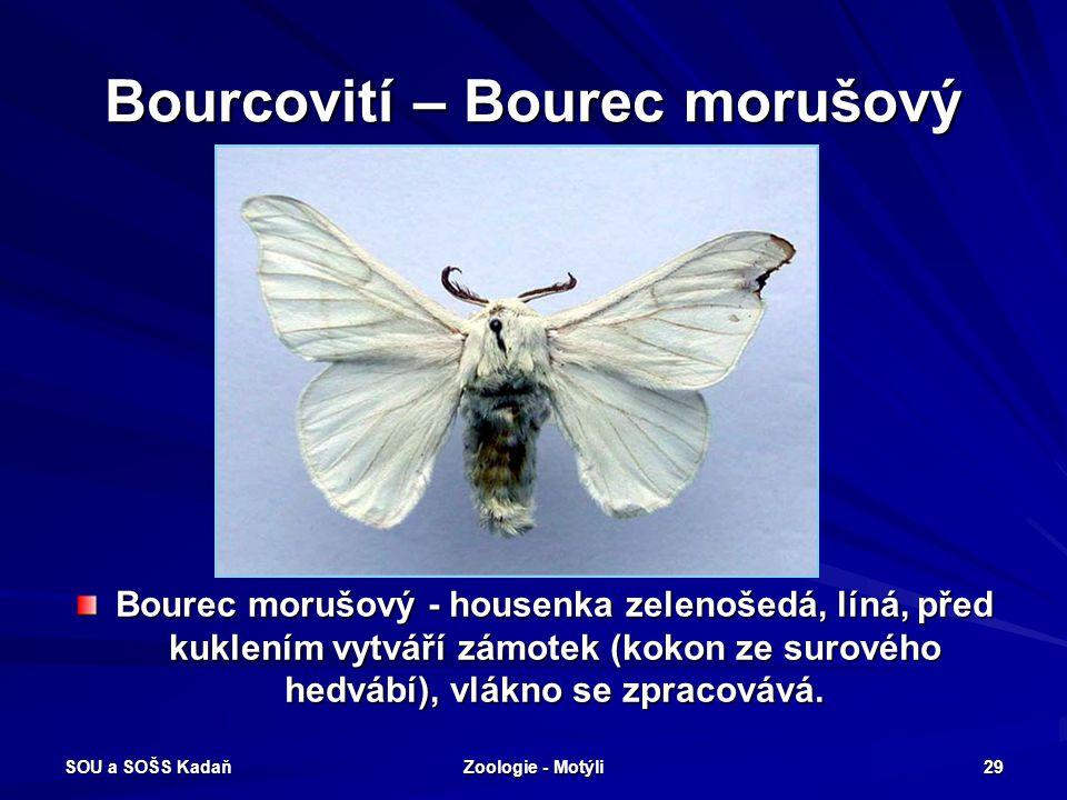 SOU a SOŠS Kadaň Zoologie - Motýli 28 Noční motýli - Bourovec ostružiníkový