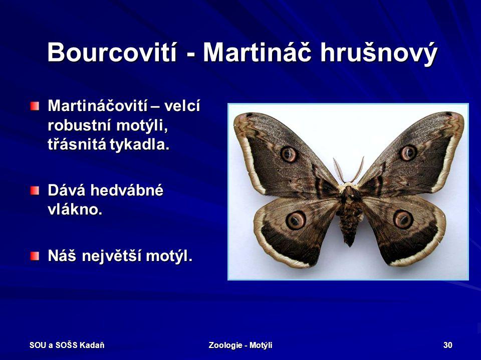 SOU a SOŠS Kadaň Zoologie - Motýli 29 Bourcovití – Bourec morušový Bourec morušový - housenka zelenošedá, líná, před kuklením vytváří zámotek (kokon z