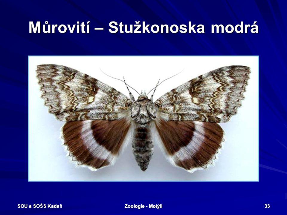 SOU a SOŠS Kadaň Zoologie - Motýli 32 Můrovití - Můra gama