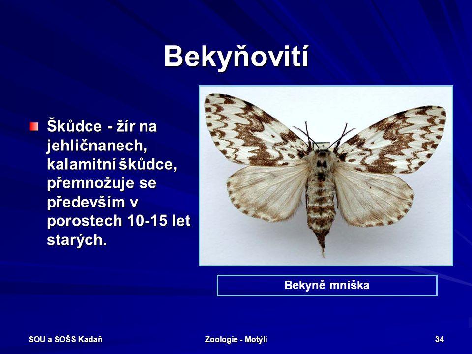 SOU a SOŠS Kadaň Zoologie - Motýli 33 Můrovití – Stužkonoska modrá