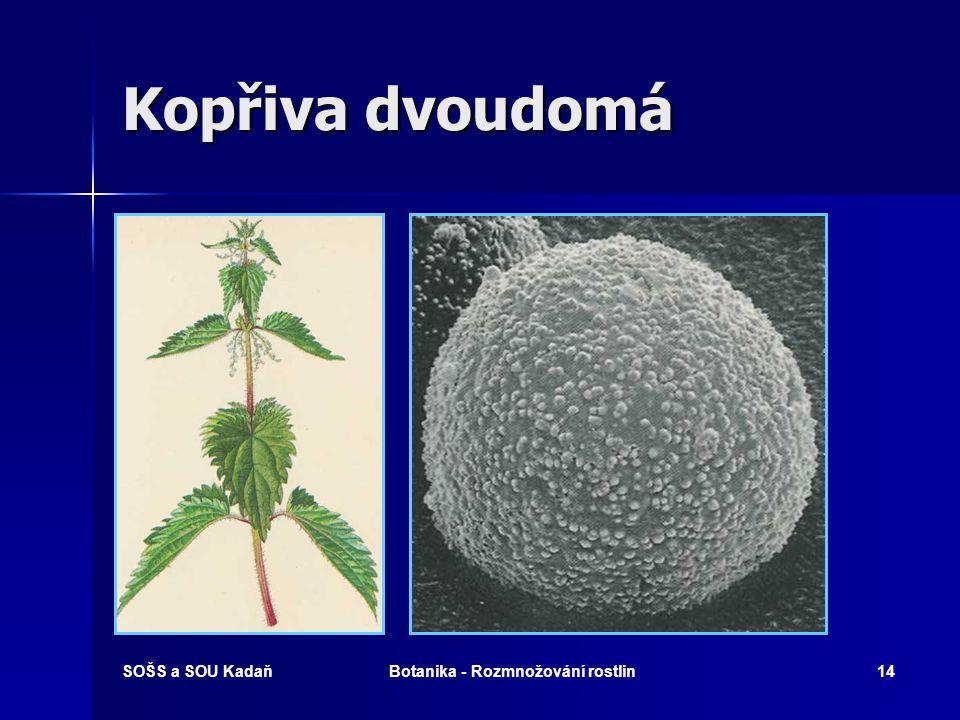 SOŠS a SOU KadaňBotanika - Rozmnožování rostlin13 Jitrocel kopinatý