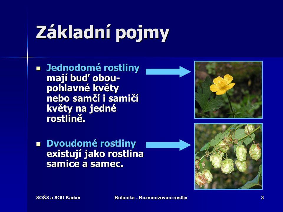 SOŠS a SOU KadaňBotanika - Rozmnožování rostlin2 Základní pojmy Jednopohlavné květy – mají pouze samčí nebo samičí pohlavní orgány.