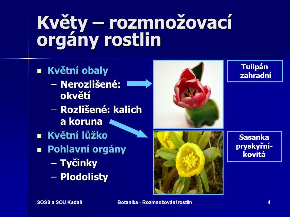 SOŠS a SOU KadaňBotanika - Rozmnožování rostlin3 Základní pojmy Jednodomé rostliny mají buď obou- pohlavné květy nebo samčí i samičí květy na jedné rostlině.