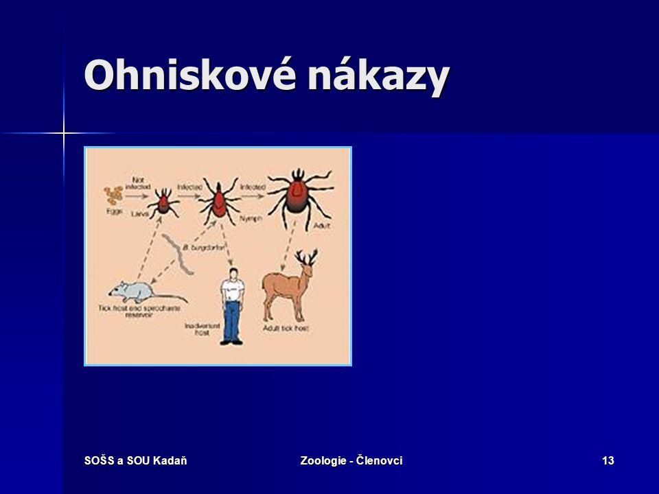 SOŠS a SOU KadaňZoologie - Členovci12 Nemoci přenášené klíšťaty Klíšťová encephalitida Klíšťová encephalitida Lymeská borelioza Lymeská borelioza Tula