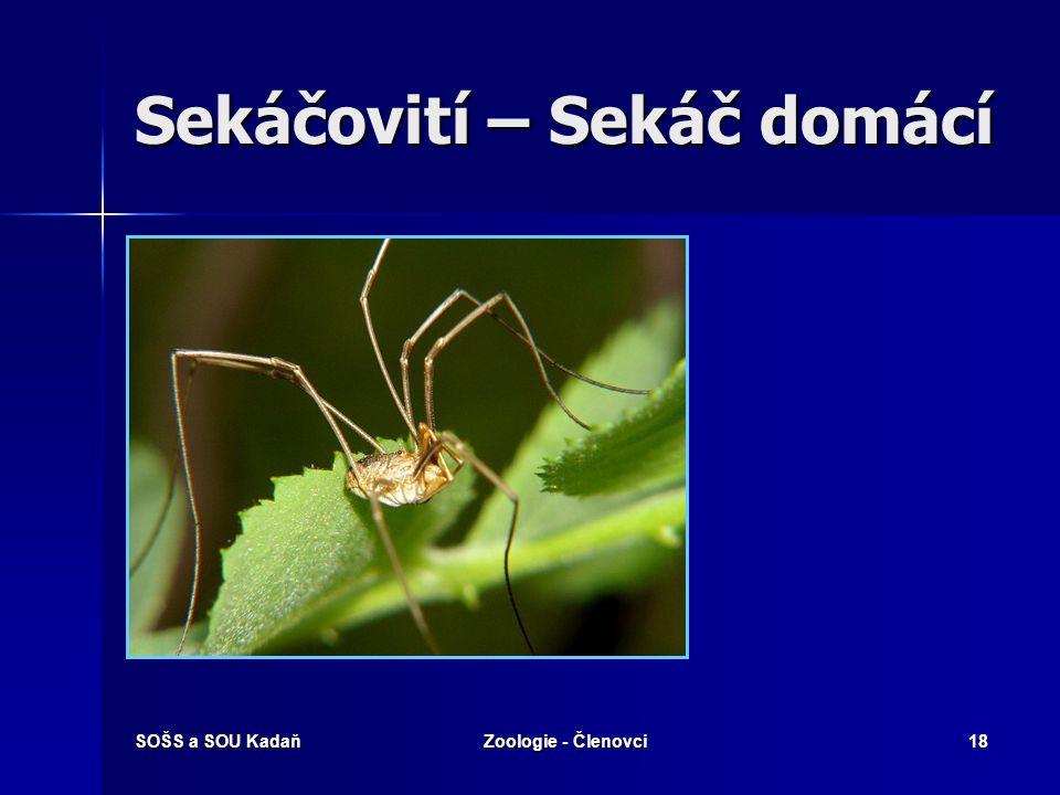 SOŠS a SOU KadaňZoologie - Členovci17 Řád: Pavouci Hlavohruď a zadeček spojené tenkou stopkou. Hlavohruď a zadeček spojené tenkou stopkou. 4 páry konč