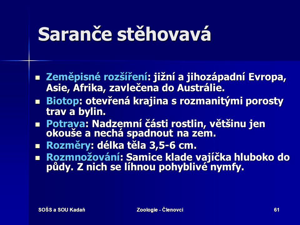 SOŠS a SOU KadaňZoologie - Členovci60 Rovnokřídlí Kobylka zelená