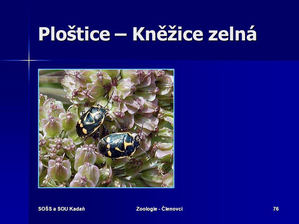 SOŠS a SOU KadaňZoologie - Členovci75 Ploštice – Ruměnice pospolná