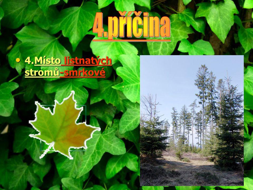4.Místo listnatých stromů-smrkové 4.Místo listnatých stromů-smrkové