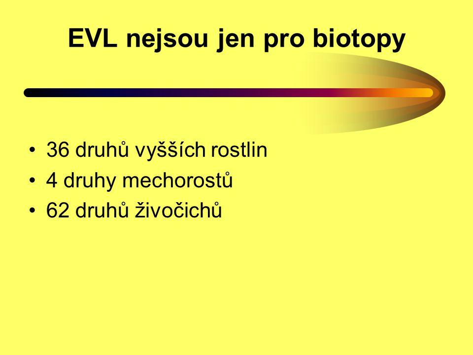 EVL nejsou jen pro biotopy 36 druhů vyšších rostlin 4 druhy mechorostů 62 druhů živočichů