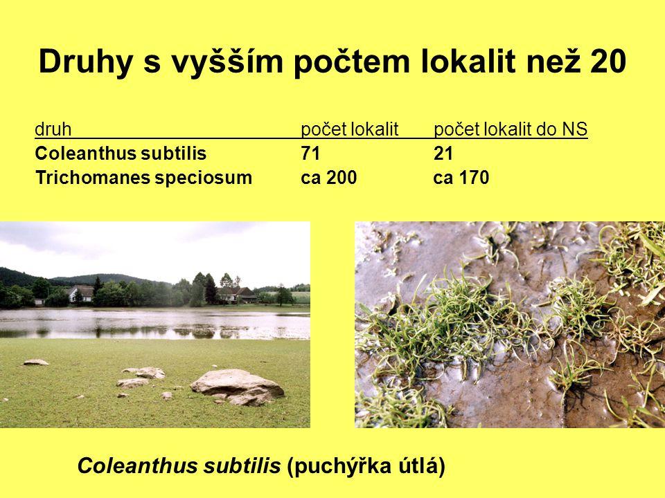 Druhy s vyšším počtem lokalit než 20 Coleanthus subtilis (puchýřka útlá) druhpočet lokalit počet lokalit do NS Coleanthus subtilis7121 Trichomanes spe