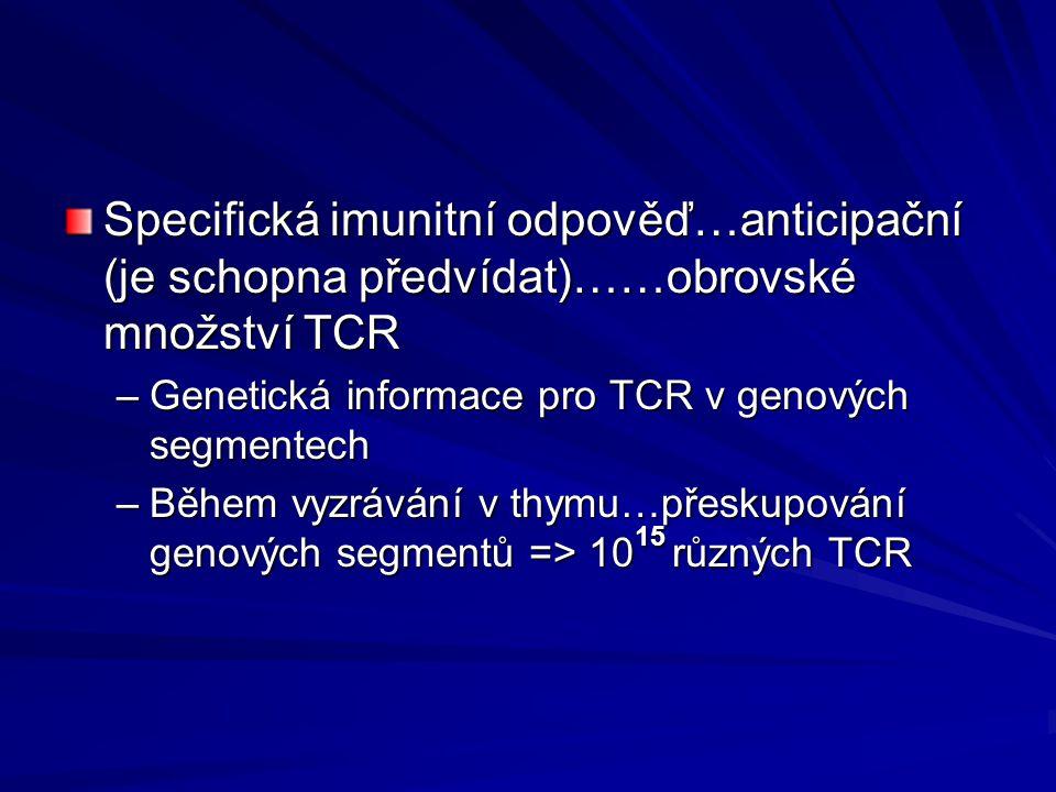 Specifická imunitní odpověď…anticipační (je schopna předvídat)……obrovské množství TCR –Genetická informace pro TCR v genových segmentech –Během vyzráv
