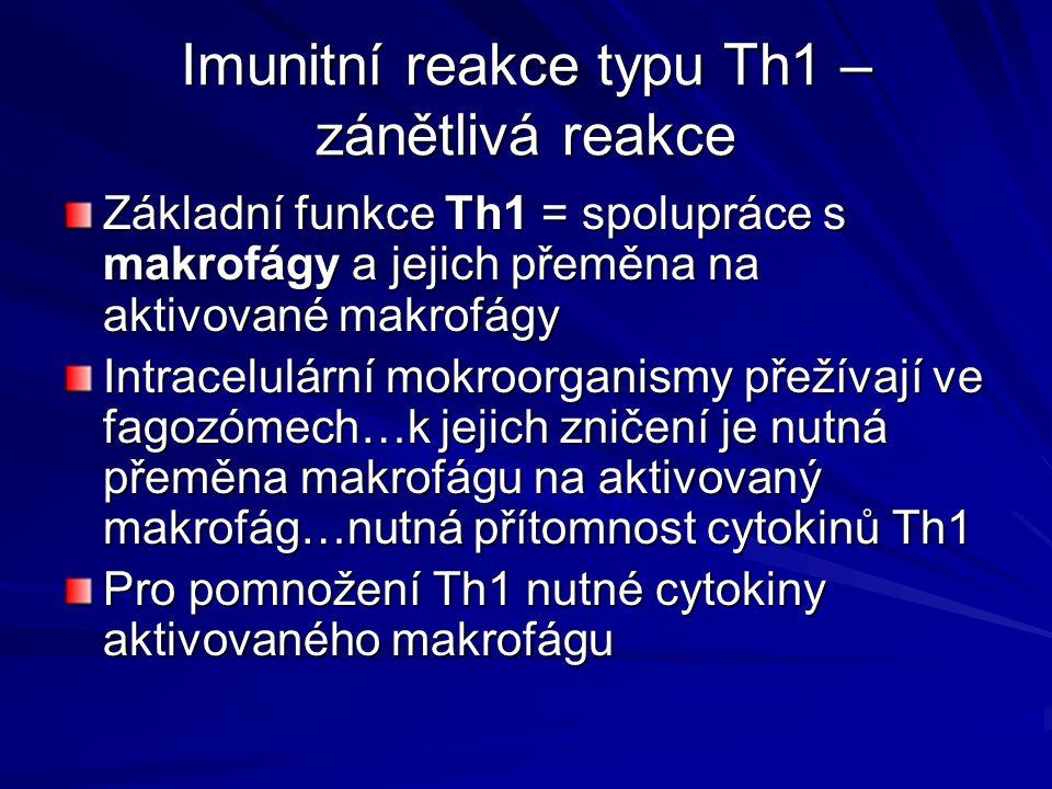 Imunitní reakce typu Th1 – zánětlivá reakce Základní funkce Th1 = spolupráce s makrofágy a jejich přeměna na aktivované makrofágy Intracelulární mokro