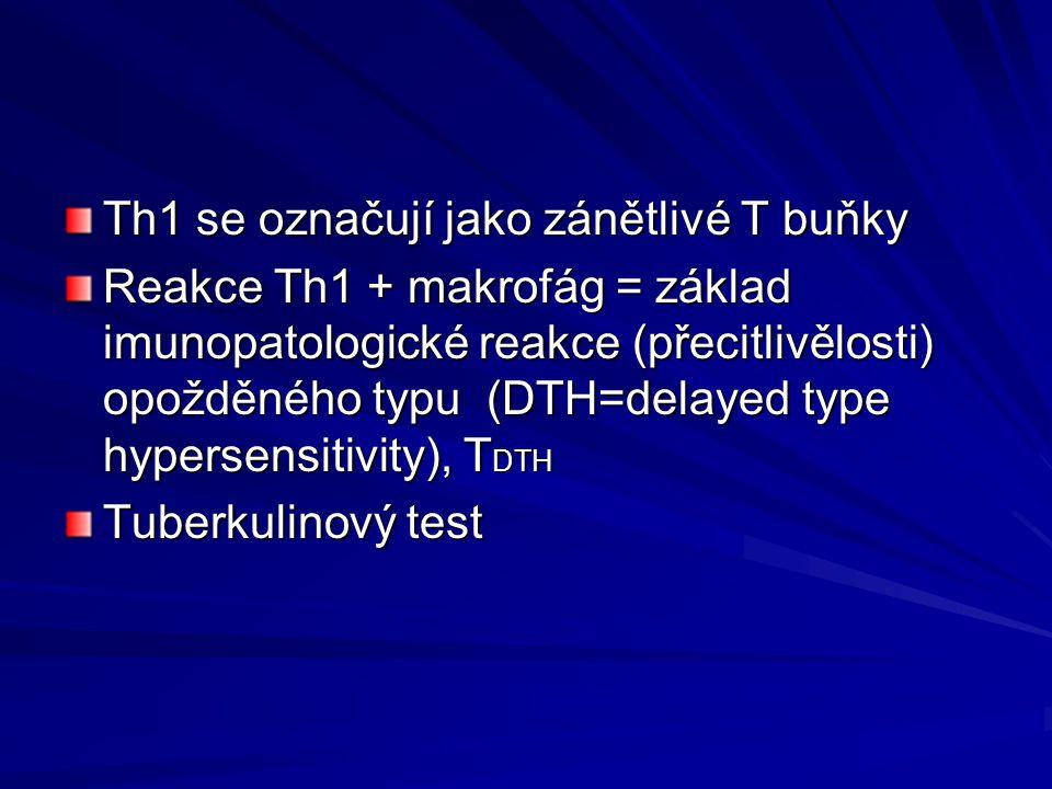 Th1 se označují jako zánětlivé T buňky Reakce Th1 + makrofág = základ imunopatologické reakce (přecitlivělosti) opožděného typu (DTH=delayed type hype