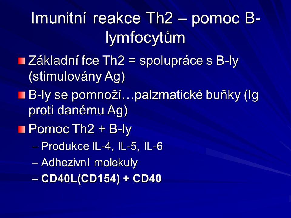 Imunitní reakce Th2 – pomoc B- lymfocytům Základní fce Th2 = spolupráce s B-ly (stimulovány Ag) B-ly se pomnoží…palzmatické buňky (Ig proti danému Ag)