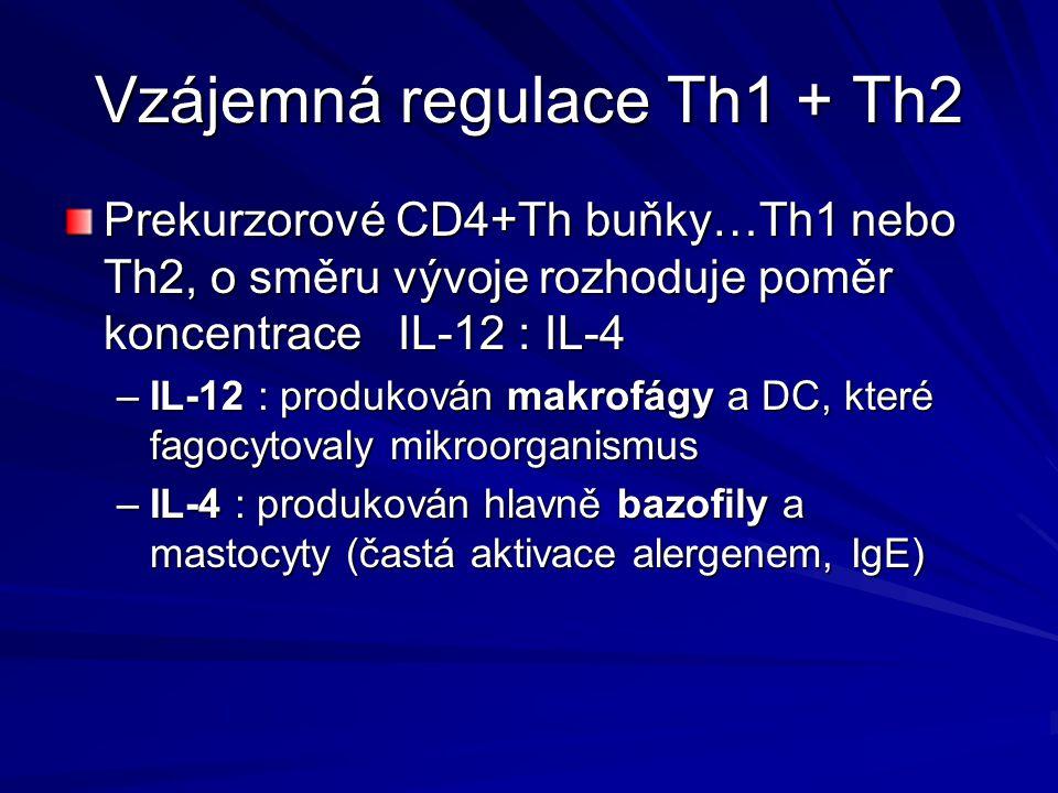 Vzájemná regulace Th1 + Th2 Prekurzorové CD4+Th buňky…Th1 nebo Th2, o směru vývoje rozhoduje poměr koncentrace IL-12 : IL-4 –IL-12 : produkován makrof