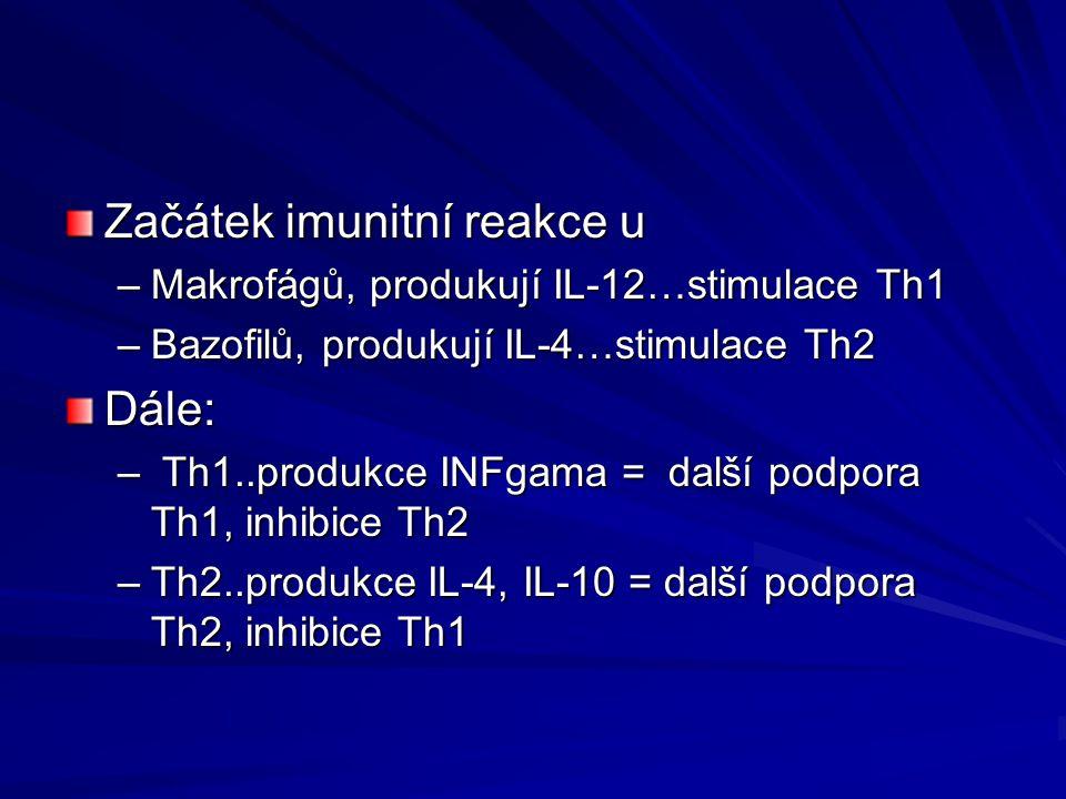 Začátek imunitní reakce u –Makrofágů, produkují IL-12…stimulace Th1 –Bazofilů, produkují IL-4…stimulace Th2 Dále: – Th1..produkce INFgama = další podp