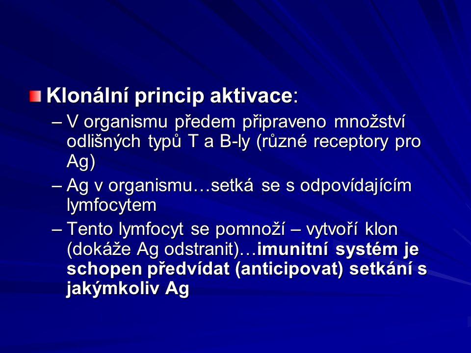 Klonální princip aktivace: –V organismu předem připraveno množství odlišných typů T a B-ly (různé receptory pro Ag) –Ag v organismu…setká se s odpovíd