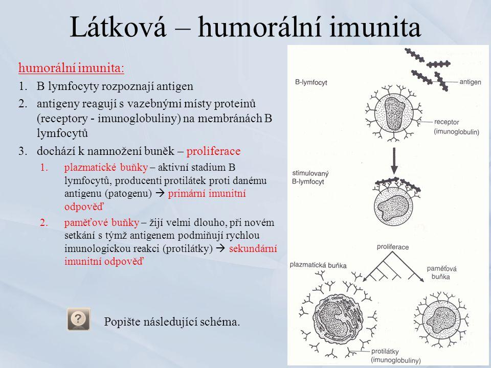 Látková – humorální imunita humorální imunita: 1.B lymfocyty rozpoznají antigen 2.antigeny reagují s vazebnými místy proteinů (receptory - imunoglobul