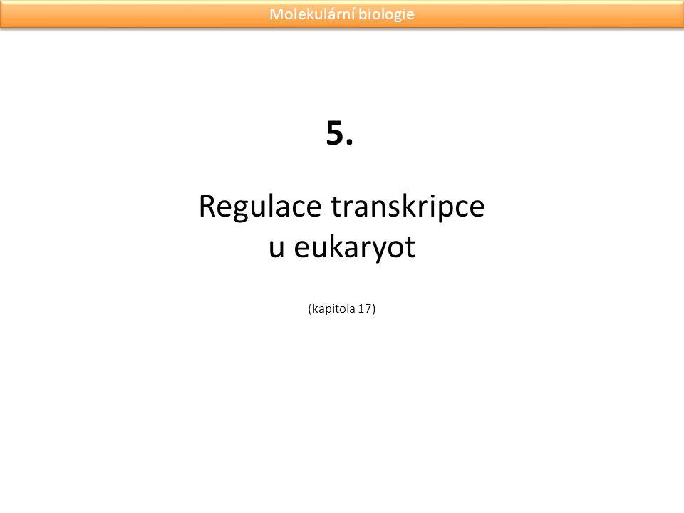 Regulace transkripce u eukaryot (kapitola 17) 5. Molekulární biologie