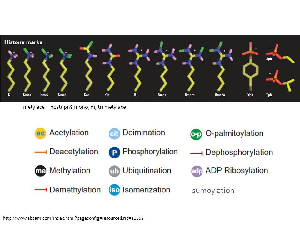 http://www.abcam.com/index.html?pageconfig=resource&rid=11652 sumoylation metylace – postupná mono, di, tri metylace