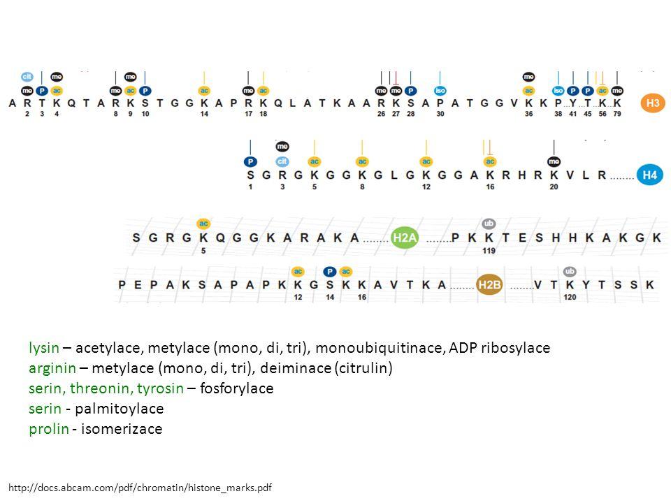http://docs.abcam.com/pdf/chromatin/histone_marks.pdf lysin – acetylace, metylace (mono, di, tri), monoubiquitinace, ADP ribosylace arginin – metylace