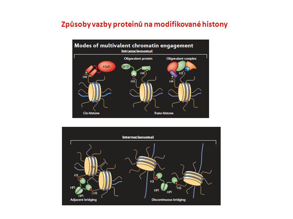 Způsoby vazby proteinů na modifikované histony