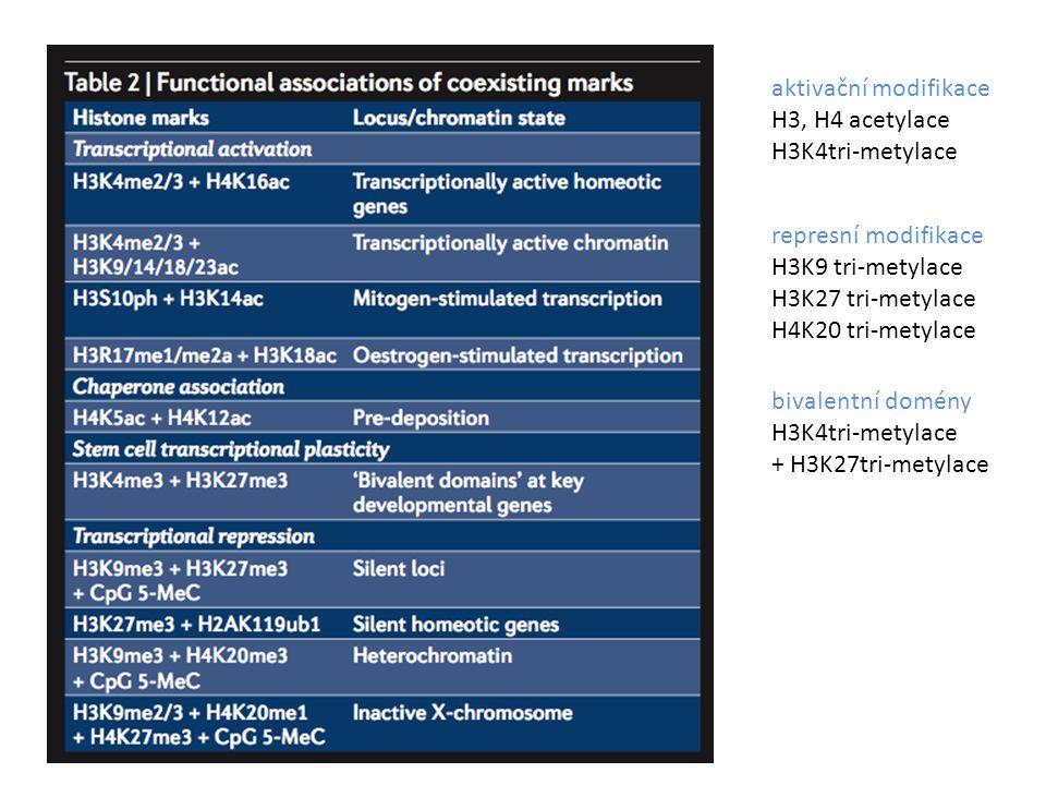 aktivační modifikace H3, H4 acetylace H3K4tri-metylace represní modifikace H3K9 tri-metylace H3K27 tri-metylace H4K20 tri-metylace bivalentní domény H