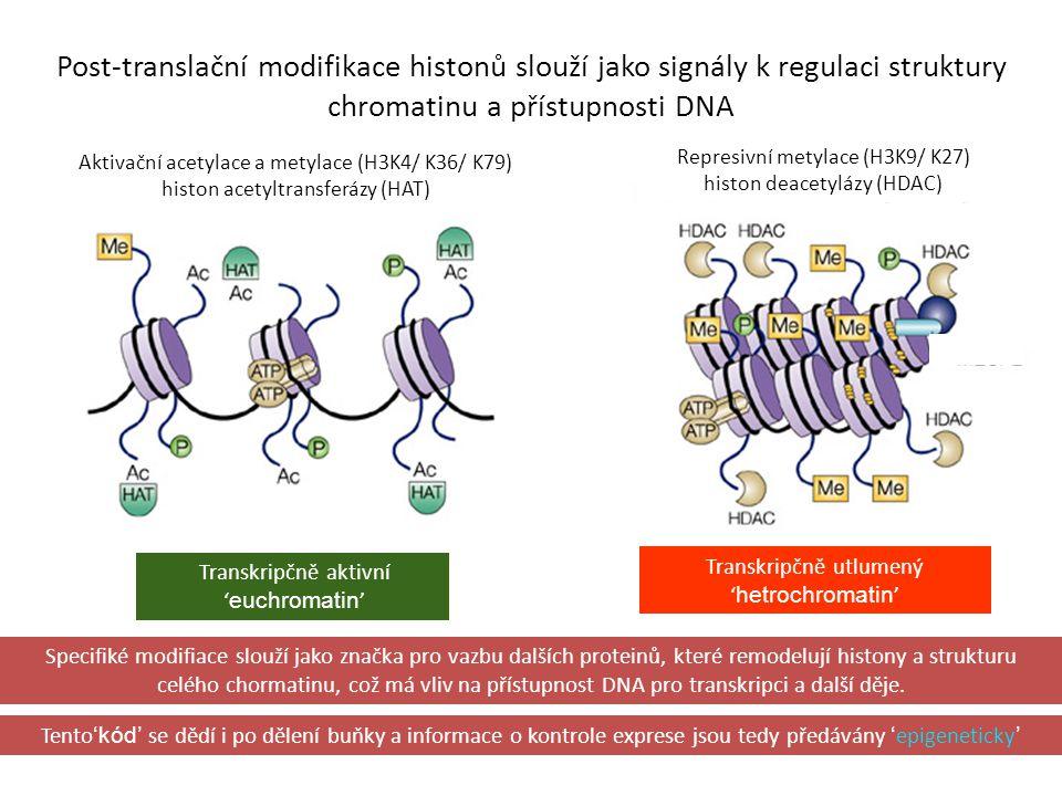 Post-translační modifikace histonů slouží jako signály k regulaci struktury chromatinu a přístupnosti DNA Specifiké modifiace slouží jako značka pro v