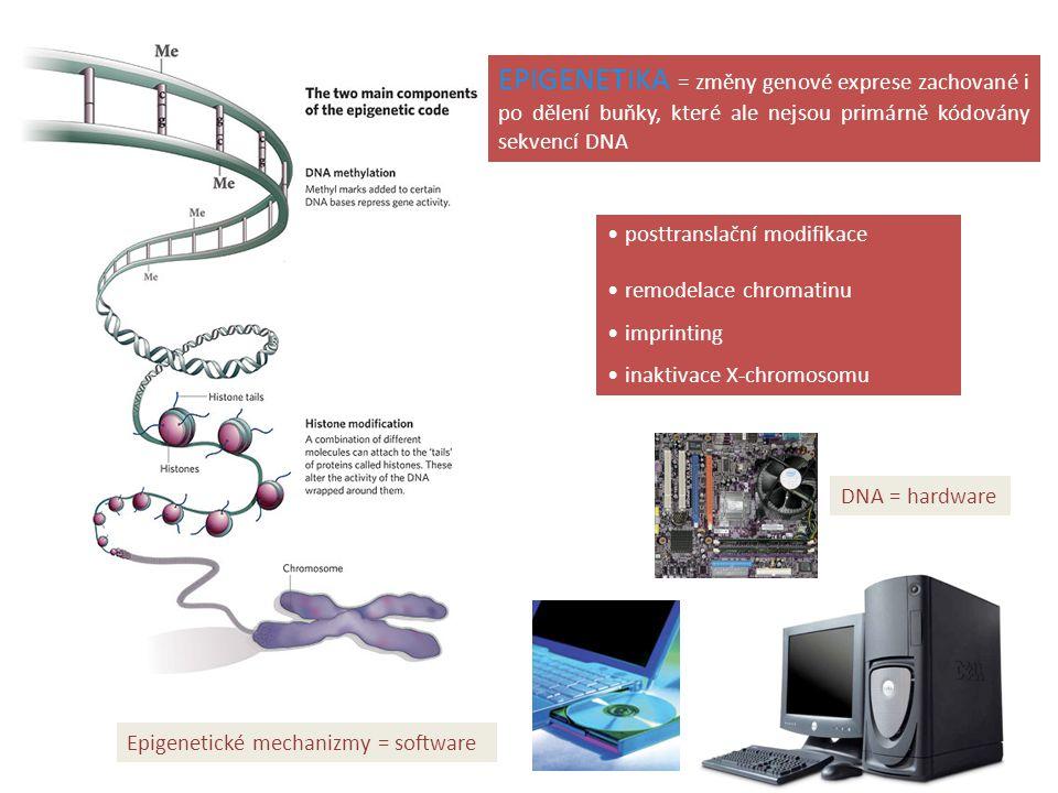 EPIGENETIKA = změny genové exprese zachované i po dělení buňky, které ale nejsou primárně kódovány sekvencí DNA posttranslační modifikace remodelace c