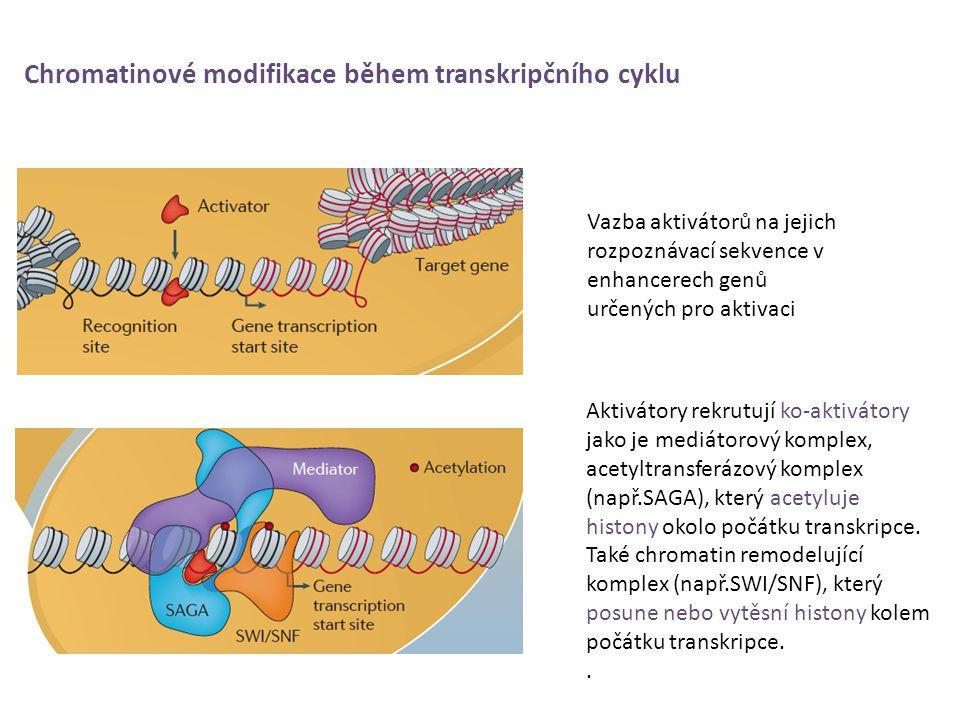 Chromatinové modifikace během transkripčního cyklu Vazba aktivátorů na jejich rozpoznávací sekvence v enhancerech genů určených pro aktivaci Aktivátor
